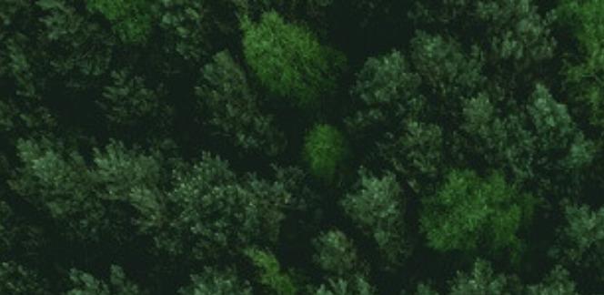 如何拨开云雾见月明?浅谈ESG评分和可持续性投资
